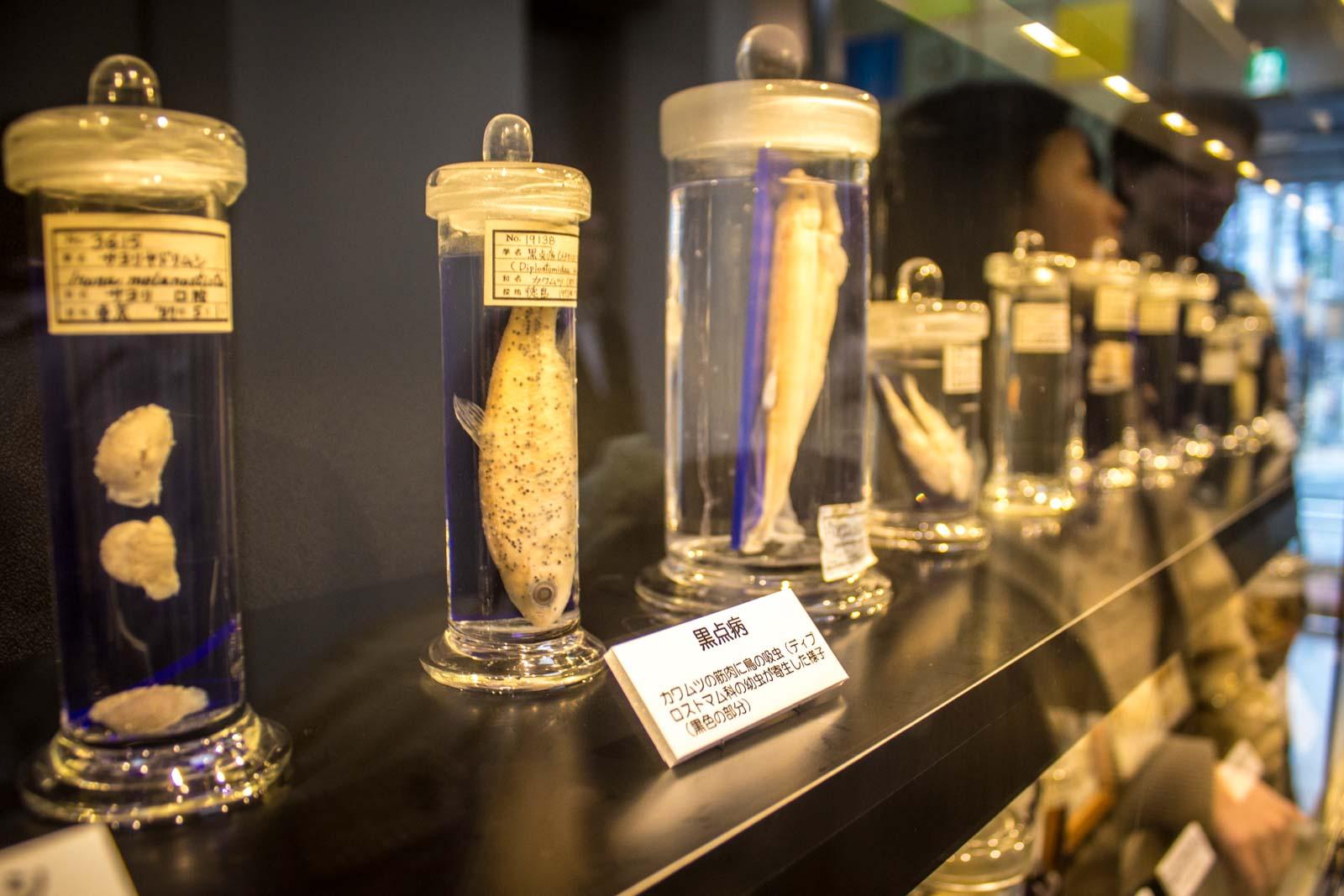 Museo dei parassiti