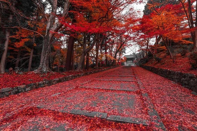 Pellegrinaggio in Giappone